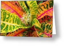 Croton Leaves Greeting Card