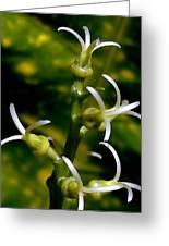 Croton Tender White Flowers Greeting Card