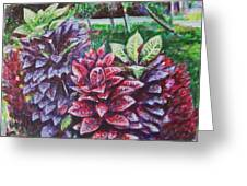 Crotons 1 Greeting Card