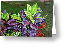 Crotons 2 Greeting Card