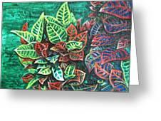 Crotons 3 Greeting Card