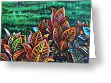 Crotons 4 Greeting Card
