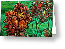 Crotons 5 Greeting Card
