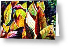 Crotons Sunlit 2 Greeting Card