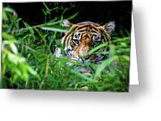 Crouching Tiger Hidden Cameraman Greeting Card
