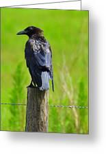 Crow 5 Greeting Card