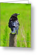 Crow 7 Greeting Card