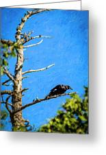 Crow In An Old Tree Greeting Card