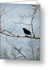 Crow In Sycamore Greeting Card