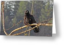Crow Morning  Greeting Card