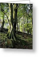 Crow Nest Woods Greeting Card