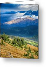 Crow On A Mountainside Greeting Card