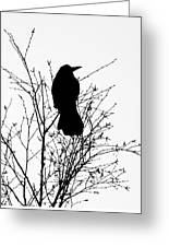 Crow Rook Perched In A Tree With Pare Branches In Winter Greeting Card