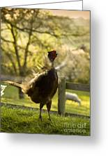Crowing Greeting Card
