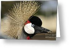 Crown Crane Close Up Greeting Card