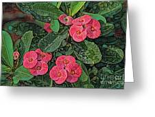 Crown Of Thorns Delight Greeting Card
