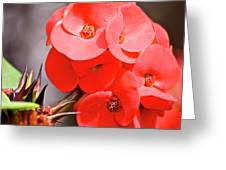crown of thorns II Greeting Card