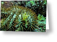Crown Of Thorns In Pohnpei Greeting Card
