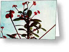 Crown Of Thorns Greeting Card by Shawna Rowe