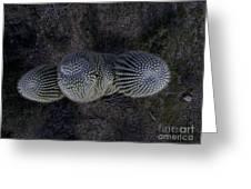 Crown Royal Saguaro Greeting Card
