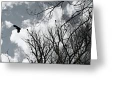 Crows In Cottonwoods Greeting Card