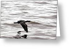Cruising Cormorant Greeting Card