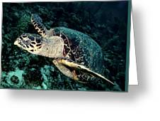 Cruising Turtle Greeting Card