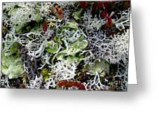 Crushed Lichen Greeting Card