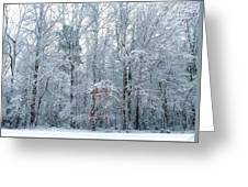 Crystal Forest Greeting Card by Jeanette Stewart