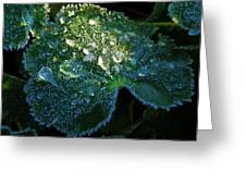 Crystal Lady's Mantle Greeting Card