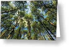 Crystal Lake Il Pine Grove And Sky Greeting Card