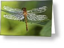 Crystal Wings Greeting Card