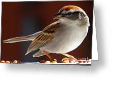 A Hungry Chipping Sparrow Greeting Card