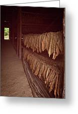 Cuban Tobacco Shed Greeting Card