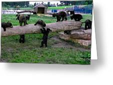Cubs At The Playground Greeting Card