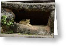 Cubs In Cave Greeting Card