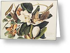 Cuckoo On Magnolia Grandiflora Greeting Card