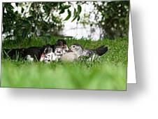 Cuddle Buddies Greeting Card