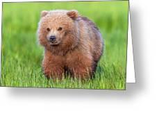 Cuddly Bear Cub Greeting Card