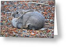 Cuddly Campground Bunny Greeting Card