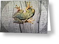 Cudjoe Key Frog Greeting Card