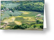 Cultivated Vineyards Tuscany  Italy Greeting Card