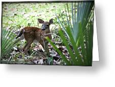 Cumberland Island Deer Greeting Card
