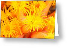 Cup Coral Greeting Card