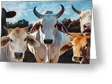 Cupcake Cows Greeting Card