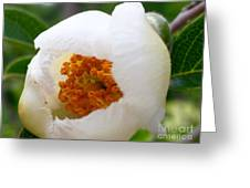 Cupping Beauty  Greeting Card