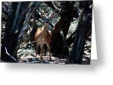 Curious Bambi Greeting Card