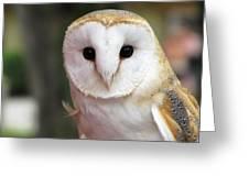 Curious Barn Owl Greeting Card