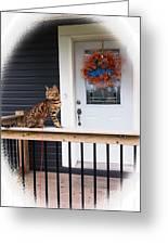 Curious Bengal Cat Greeting Card