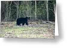 Curious Black Bear  Greeting Card